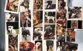 Ομόφωνα το Δ.Σ. Κηφισιάς αποφάσισε την αναζήτηση χώρου για τη δημιουργία καταφυγίου αδέσποτων ζώων