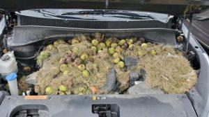 Απίστευτο: Άνοιξαν το καπό του αυτοκινήτου και τα έχασαν με αυτό που αντίκρισαν
