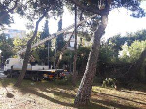 Άμεση ήταν η επέμβαση σήμερα το πρωί του συνεργείου πράσινου του Δήμου Βριλησσίων την οδό Γράμμου και 28 Οκτωβρίου όταν έπεσε ένα μεγάλο πεύκο
