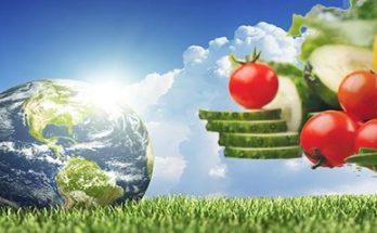 Νέα έρευνα: Η vegan διατροφή κάνει καλό στο περιβάλλον