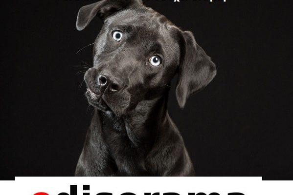 Από πού είναι προτιμότερο να πάρει κανείς σκύλο από την Φιλοζωική ή από ένα petshop