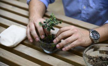 Ένας νέος αγρότης από την Κορινθία στέλνει ελαιόδεντρα-μπονσάι σε όλο τον πλανήτη