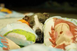 Ένα κέντρο ημερήσιας φροντίδας για σκυλιά στην Νότια Κορέα βγαλμένο από παραμύθι