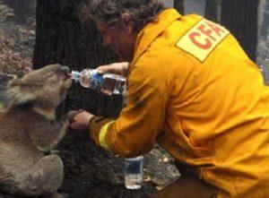 Video Αυστραλία Φωτιές: Μισό δισεκατομμύριο ζώα βρήκαν μαρτυρικό θάνατο