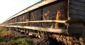 Η Νορβηγία κλείνει όλες τις φάρμες εκτροφής ζώων για γη γούνα