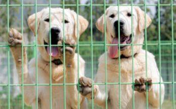 Ισπανία: Έκοβαν τις φωνητικές χορδές σκύλων για να μη γαβγίζουν