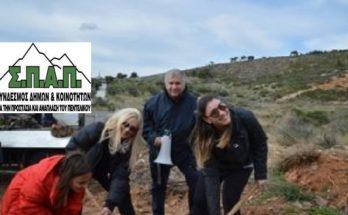 Με επιτυχία πραγματοποιήθηκε η 3η Εθελοντική Δράση Αναδάσωσης για το 2020 από τον Σ.Π.Α.Π. και την «Ελληνική Εταιρία Προστασίας της Φύσης» στη Νταού Πεντέλη.