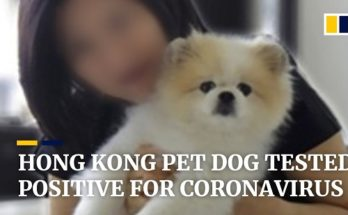 Πέθανε ο 17χρονος σκύλος που είχε βρεθεί «ελαφρά θετικός» στον κορονοϊό στο Χονγκ Κονγκ