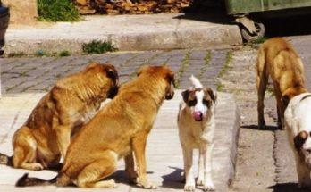Μεταμόρφωση: Συνεχίζεται κανονικά η καθημερινή παροχή τροφής και νερού στα αδέσποτα ζώα στη Μεταμόρφωση