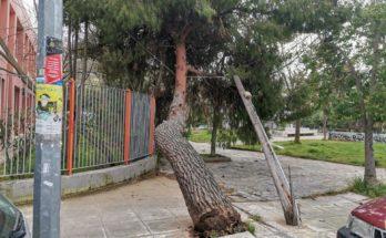 Βριλήσσια: Πτώση μεγάλου δέντρου