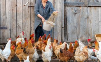 Ελληνοποίηση αβγών από Τουρκία, Αλβανία, Βουλγαρία