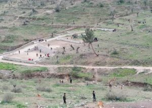 Περισσότερες από 5000 ελιές κομμένες από την ρίζα στον Ελαιώνα της περιοχής της Μοριάς