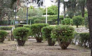 Νέα Ιώνια: Οι εργαζόμενοί συνεχίζουν τις καθημερινές παρεμβάσεις καθαρισμού και ευπρεπισμού σε πλατείες και κοινόχρηστους χώρους της πόλης