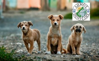 Πεντέλη: Σήμερα 4 Απριλίου Παγκόσμια Ημέρα Αδέσποτων Ζώων ο Δήμος σε συνεργασία με τη Φιλοζωική και εθελοντές φροντίζει για τους αδέσποτους φίλους μας.