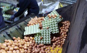 Tο ΣΔΟΕ εντόπισε 324.000 αβγά σε αποθήκη στο Κορωπί από την Βουλγαρία χωρίς κωδικό εκτροφής και παραστατικά