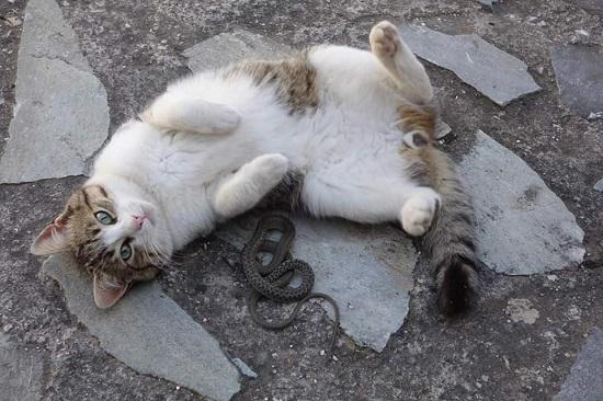 Η γάτα με το φίδι