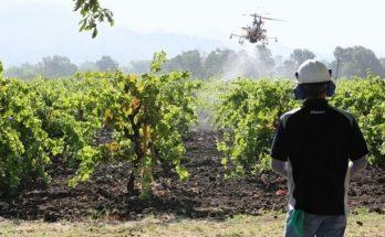 Κρήτη: Με drones οι ψεκασμοί για τον δάκο