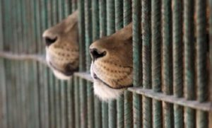 WWF: Έρευνα «Η απώλεια της φύσης και η έξαρση των πανδημιών»