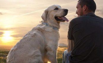 Τα σκυλιά περνούν εφηβεία σύμφωνα με τους ερευνητές του βρετανικού Πανεπιστημίου του Νιούκαστλ