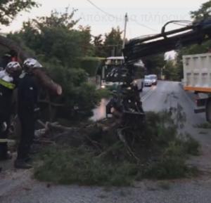 Πεντέλη : Πτώση μεγάλου Δέντρου στην Ελευθέριου Βενιζέλου στην Δ.Κ Πεντέλης