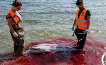 Ελλάδα: Άγνωστοι έκοψαν με μαχαίρι τα πτερύγια δελφινιών