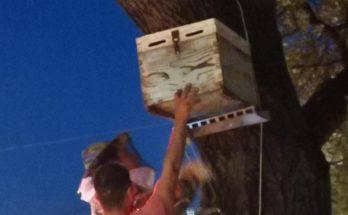 Βριλήσσια: Πολιτική προστασία - Περισυλλογή και διάσωση μελισσών που είχαν φτιάξει φωλιά σε κεντρικό δέντρο της πόλης