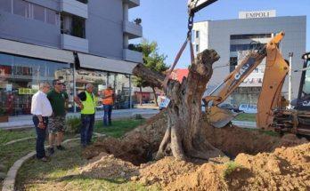 Ηράκλειο Αττικής : Η ΕΡΓΟΣΕ και το Πράσινο Ταμείο δώρισαν μια υπεραιωνόβια ελιά στο Δήμο