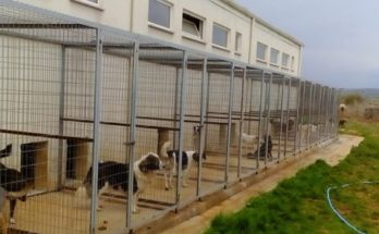 Αγία Παρασκευή: Την αναγκαιότητα δημιουργίας καταφυγίου αδέσποτων ζώων ιδιοκτησίας τού Συνδέσμου (ΣΒΑΠ) ζητά ο Δήμαρχος από υπουργείο