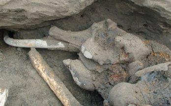 Περιβάλλον: Το λιώσιμο των πάγων φέρνει διαρκώς στο φως λείψανα προϊστορικών ζώων στη Σιβηρία βρέθηκε μαμούθ ηλικίας 10.000 ετών