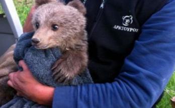 Μικρό αρκουδάκι εγκλωβίστηκε σε συρματοπλέγματα αγροικίας στην Μεσοποταμίας Καστοριάς