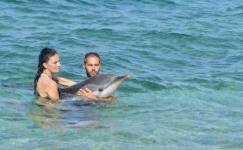 Έχασε τον προσανατολισμό του μικρό δελφίνι στην Αλόννησο