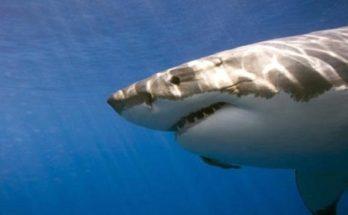 Αμερική : Δέχτηκε επίθεση από καρχαρία ενώ έκανε σέρφ - Την έσωσε ο σύζυγος της