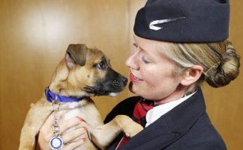 Διεθνή: Στο αεροδρόμιο του Σαν Ντιέγκο υπάρχει τουαλέτα για τα σκυλάκια που ταξιδεύουν