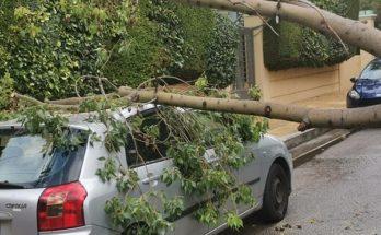 Βριλήσσια : Πτώση δέντρου στην οδό Κονίτσης και Πίνδου - Υλικές ζημίες σε σταθμευμένο αυτοκίνητο