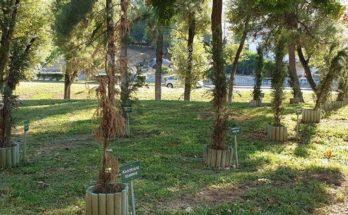 Νέας Ιωνία: Δήλωση της Δημάρχου Νέας Ιωνίας Δέσποινας Θωμαΐδου για τα δέντρα στο μνημείο του Μπλόκου της Καλογρέζας