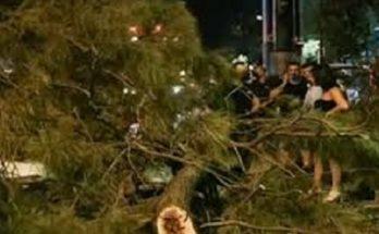 Χαλάνδρι : Δέντρο καταπλάκωσε περαστικό