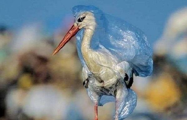Περιβάλλον: Όχι στις πλαστικές σακούλες