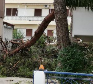 Νέο Ηράκλειο : Συνεχίζονται οι εργασίες απομάκρυνσης των πεσμένων δέντρων από τις αυλές σπιτιών