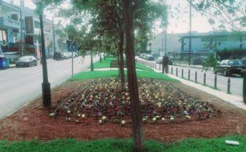 Παλλήνη: Μικροί ανθόκηποι που θα είναι ανθισμένοι όλο τον χρόνο έδωσαν χρώμα στο κέντρο της πόλης