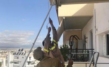Περιβάλλον: Πυροσβέστες απεγκλωβίζουν από τα κεραμίδια πολυκατοικίας πουλάκι που είχε μπλεχτεί σε σύρμα
