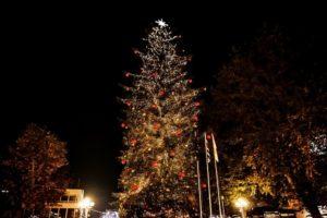 Τρίκαλα : Φωταγωγήθηκε το ψηλότερο φυσικό χριστουγεννιάτικο δέντρο της Ελλάδας -Στα Τρίκαλα