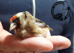 Περιβάλλον :Τοποθετήστε διακριτικά στις μεγάλες τζαμαρίες των οικιών και σώστε τα πουλιά που συγκρούονται σε αυτές