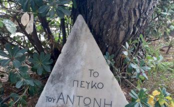 Χαλάνδρι: «Το Δέντρο του Αντώνη» - Με έμπνευση από τον Αντώνη Σαμαράκη - Το Εργαστήριο ξεκίνησε!