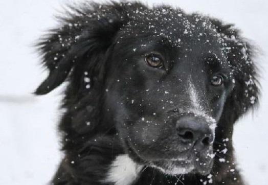 Έκκληση «χιόνι και παγετός» σκεφτείτε τα αδέσποτα ζωάκια αφήστε τους λίγη τροφή και νερό