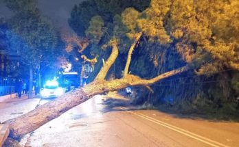 Νέα Φιλαδέλφεια Νέα Χαλκηδόνα: Έπεσε δέντρο σήμερα στην Λεωφόρο Δεκελείας - Διεκόπη η κυκλοφορία
