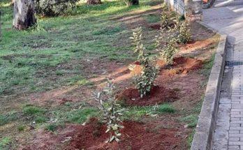 Παπάγου Χολαργός : Η υπηρεσία πράσινου του Δήμου συνεχίζει τις εργασίες καλλωπισμού και ενίσχυσης του πρασίνου στην πόλη