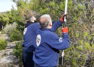 Πεντέλη: Δράση για το κόψιμο και κάψιμο των κουκουλιών κάμπιας στην διασταύρωση Αγίου Παντελεήμονα