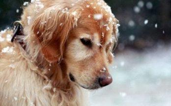 Σύλλογος Ζωόφιλων Αγίας Παρασκευής: «Θερμή Παράκληση» Αν μπορεί κάποιος να φιλοξενήσει για τις ημέρες του παγετού κάποιο από τα σκυλάκια μας