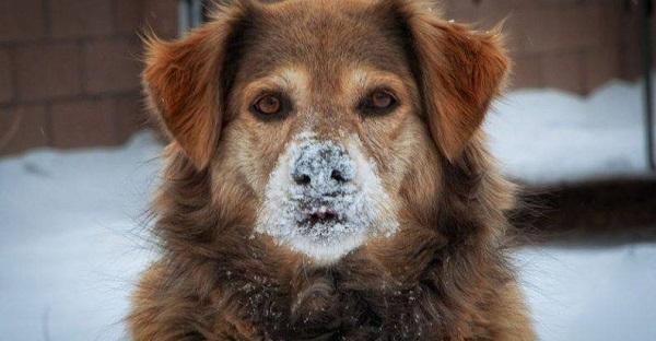 Φιλοζωική Ένωσης Προστασίας Αδέσποτων Δήμου Φιλοθέης Ψυχικού «Ζω.Φι.Ψυ.» Αδέσποτα ζώα εκθεμένα στο κρύο ή τα χιονιά