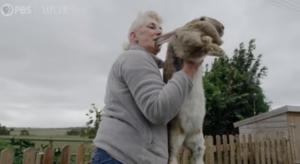 Βρετανία : Άγνωστοι έκλεψαν το μεγαλύτερο κουνέλι στον κόσμο «σύμφωνα με το ρεκόρ Γκίνες το 2010»